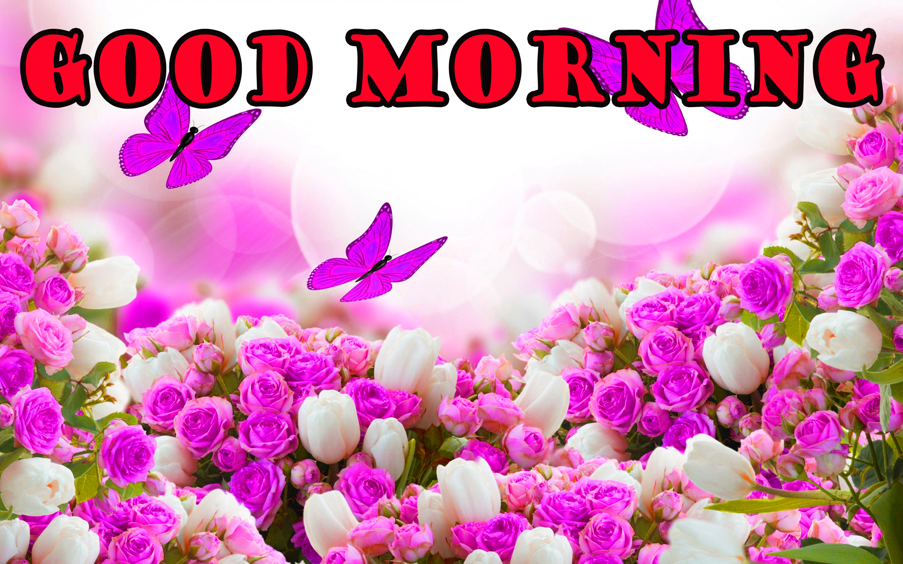 गुड मॉर्निंग New Wonderful Good Morning Wallpaper Pictures Photo Free Download