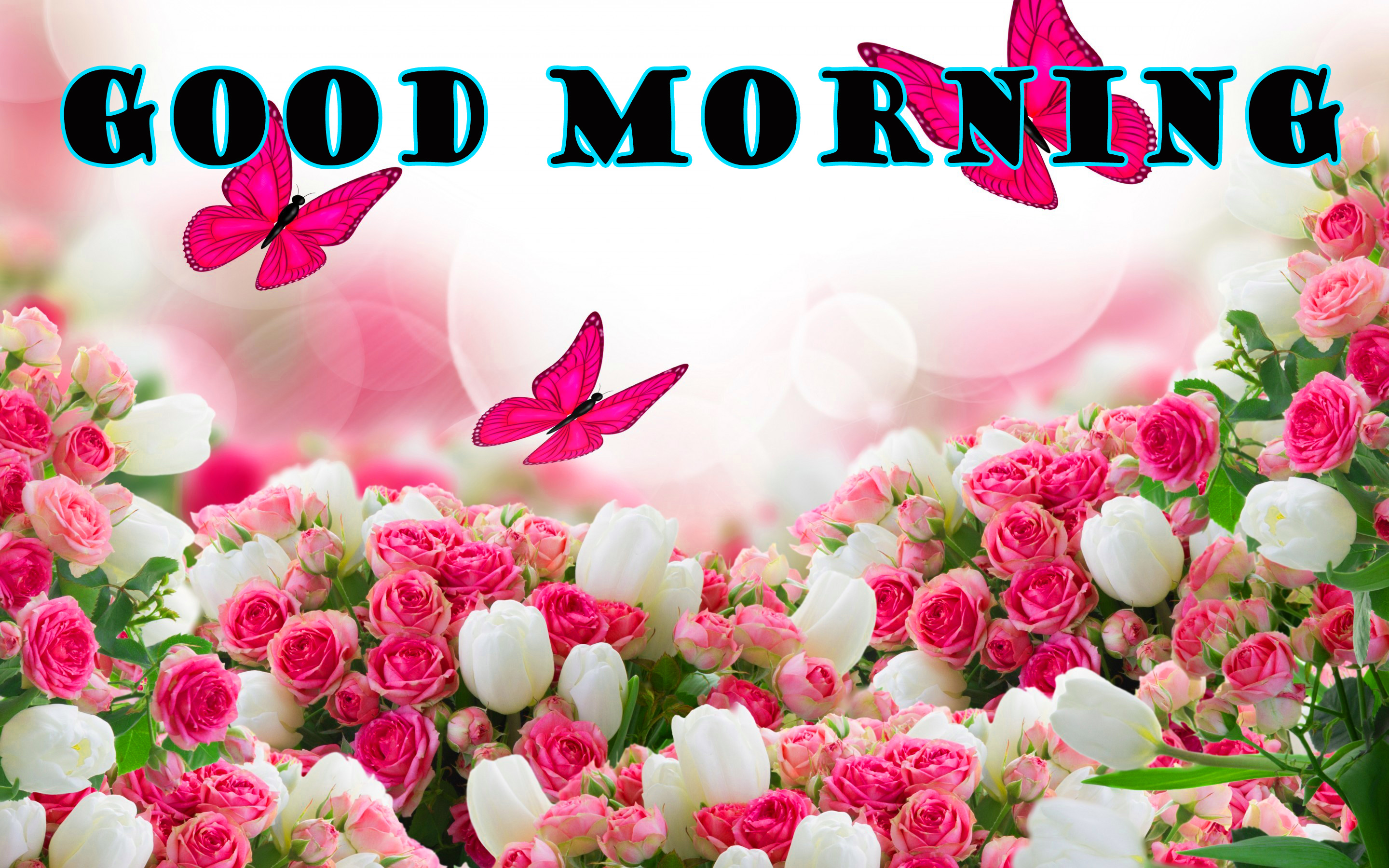 गुड मॉर्निंग New Wonderful Good Morning Wallpaper Pictures Photo HD
