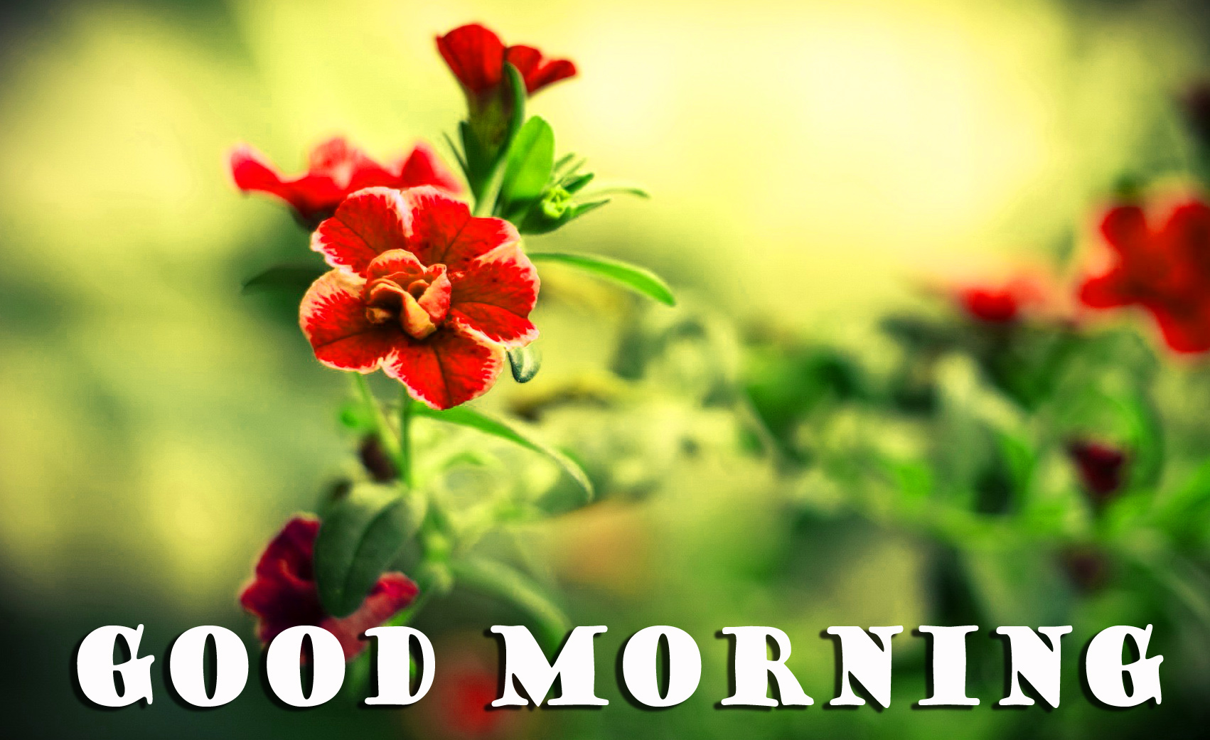 गुड मॉर्निंग New Wonderful Good Morning Wallpaper Pictures Photo Free HD