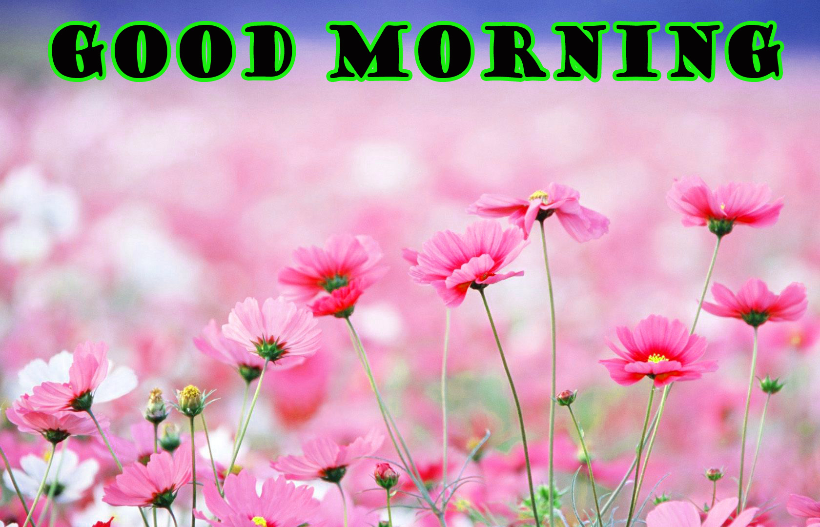 गुड मॉर्निंग New Wonderful Good Morning Images Photo Wallpaper Download