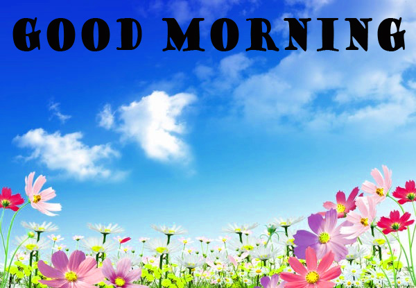 गुड मॉर्निंग New Wonderful Good Morning Photo Wallpaper Pictures Free Download