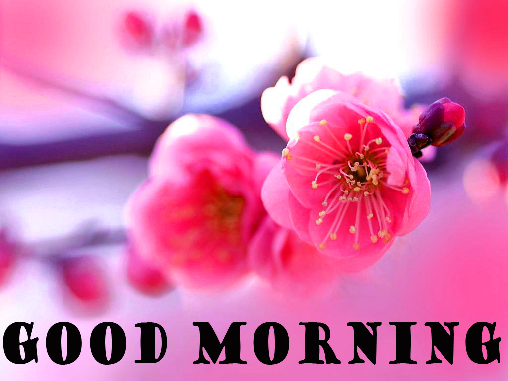 गुड मॉर्निंग New Wonderful Good Morning Photo Pictures Images Free HD Download