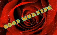 472+ Good morning red rose images Wallpaper Pics for girlfriend & Wife