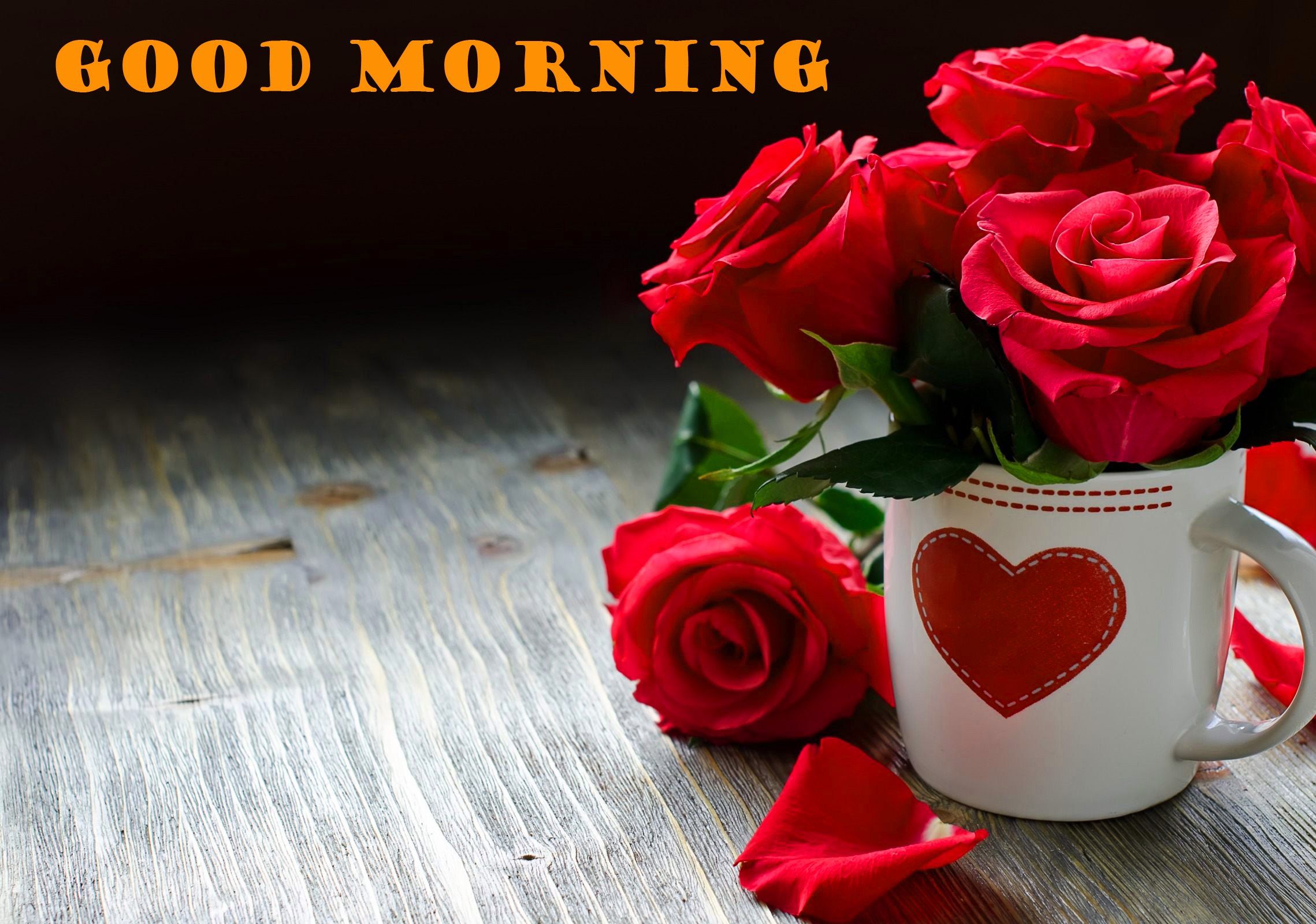 Good Morning Red Rose Wallpaper Pictures HD Download