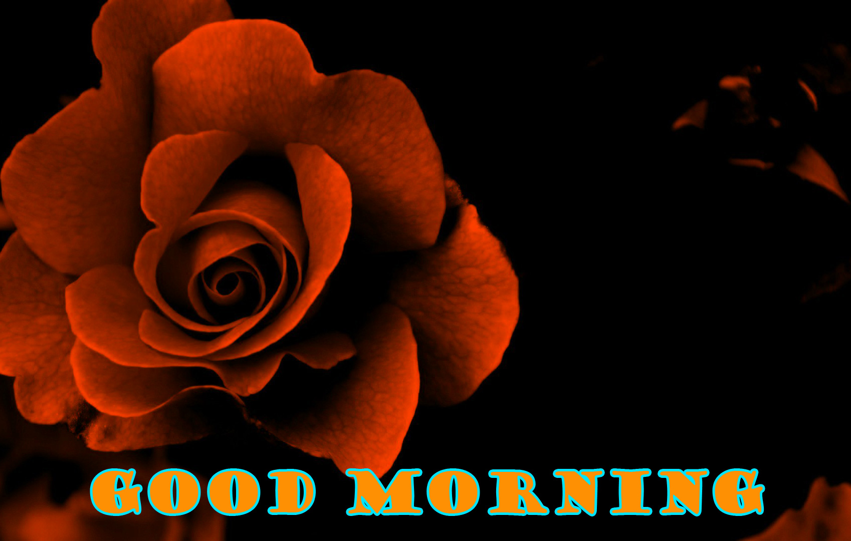 Good Morning Red Rose Photo Wallpaper Pictures HD