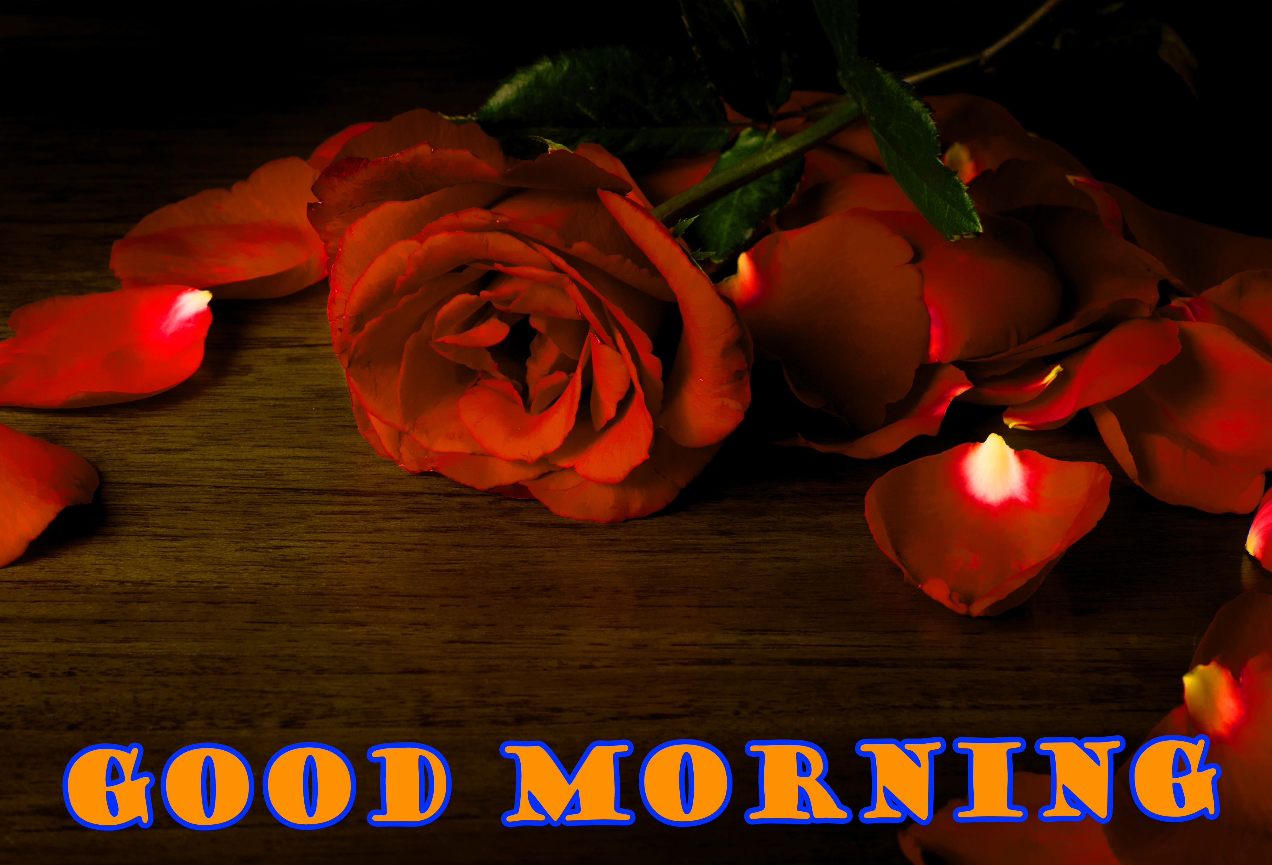 Good Morning Red Rose Photo Images Wallpaper Download