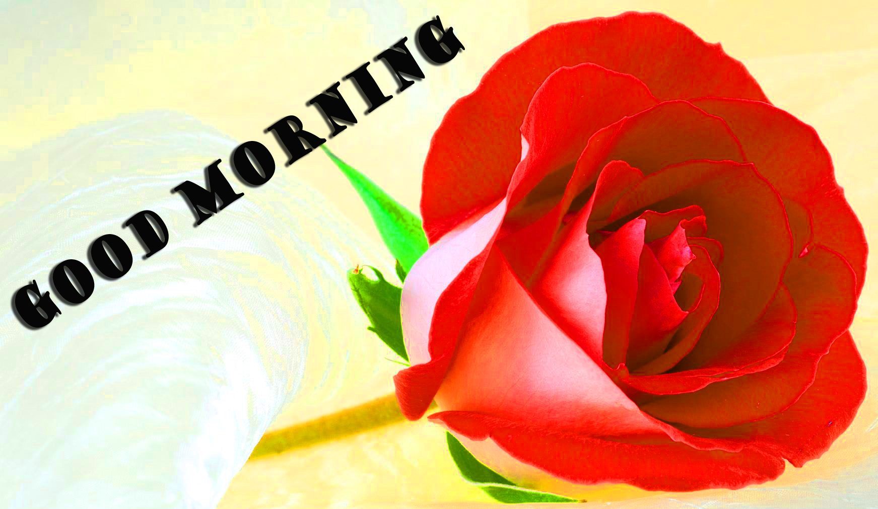 Good Morning Red Rose Wallpaper Pictures Images Free Download