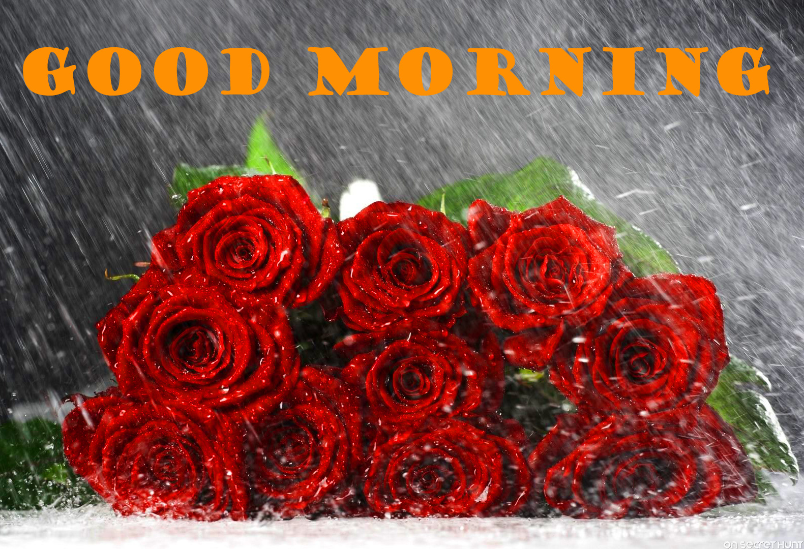 Good Morning Red Rose Photo Images Pictures Free HD