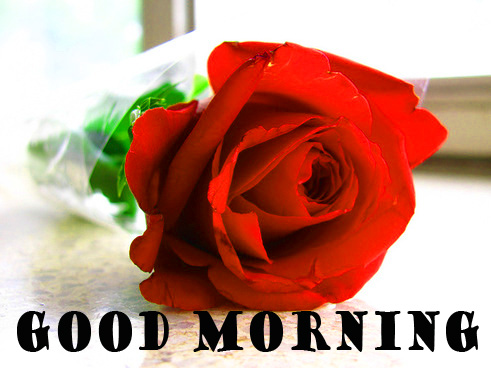 Good Morning Red Rose Photo Pictures Images HD