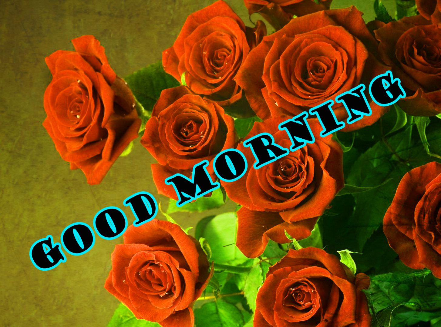 Good Morning Red Rose Pictures Images Photo Free Download