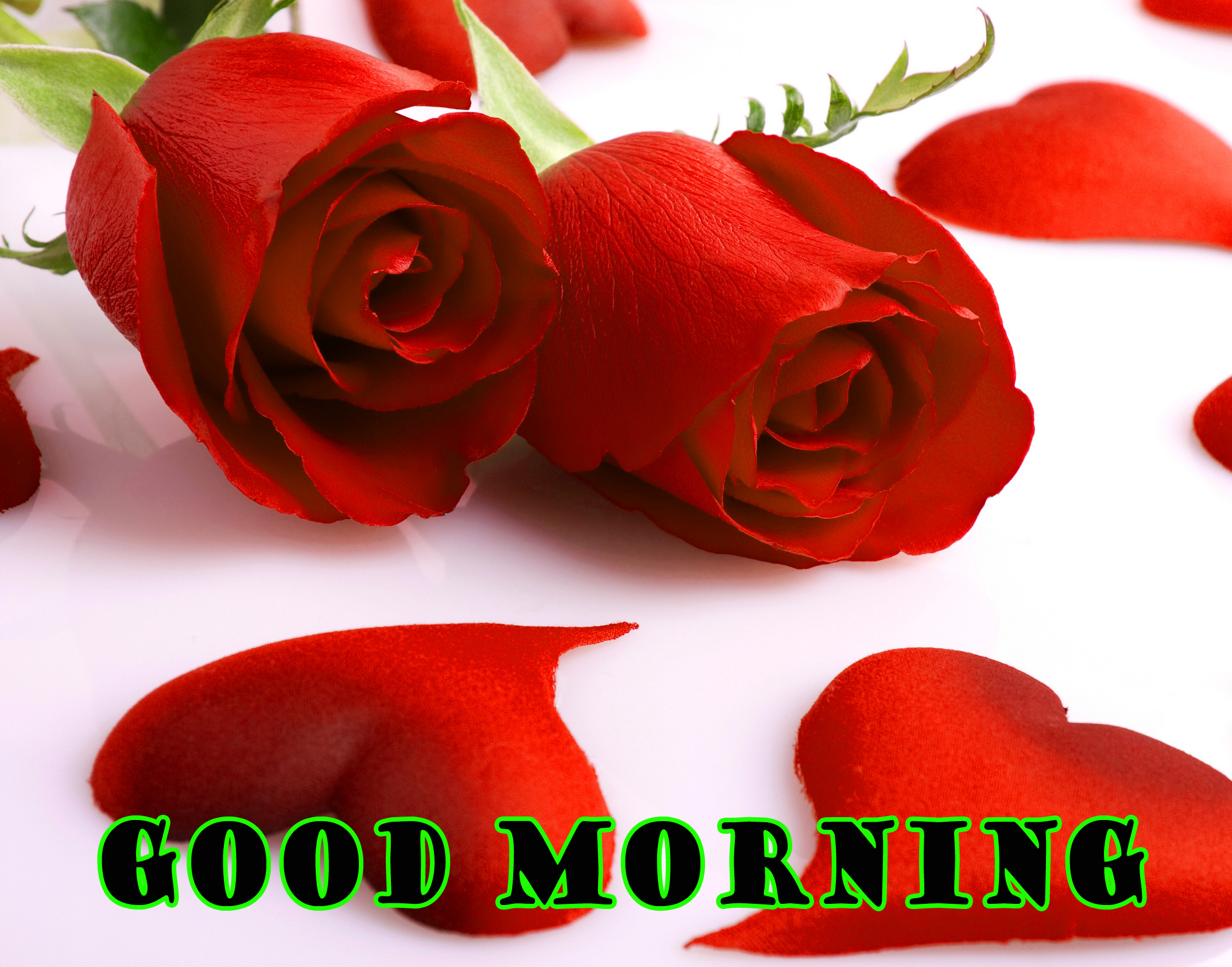 Good Morning Red Rose Pictures Images Photo Free HD Download