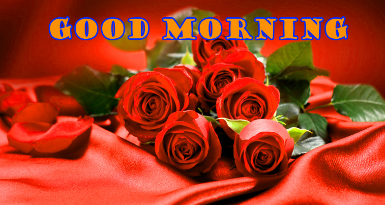 Good Morning Red Rose Wallpaper Pictures Free HD
