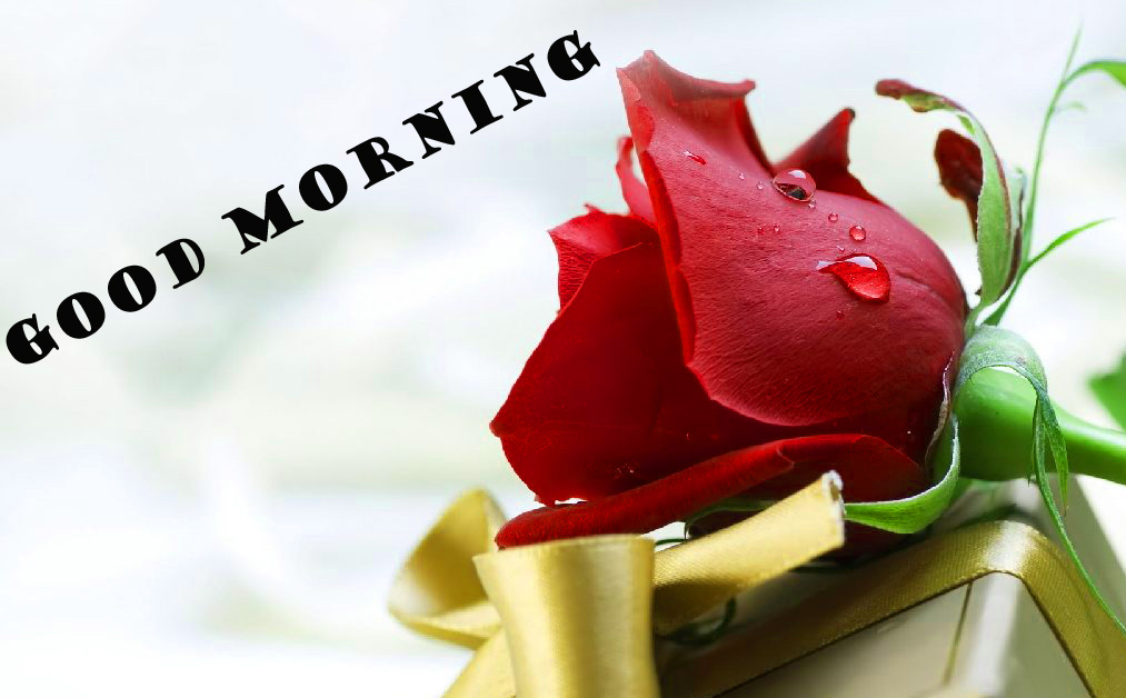 Good Morning Red Rose Wallpaper Pictures For Faceook
