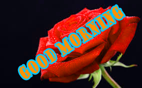 Good Morning Red Rose Wallpaper Photo Download