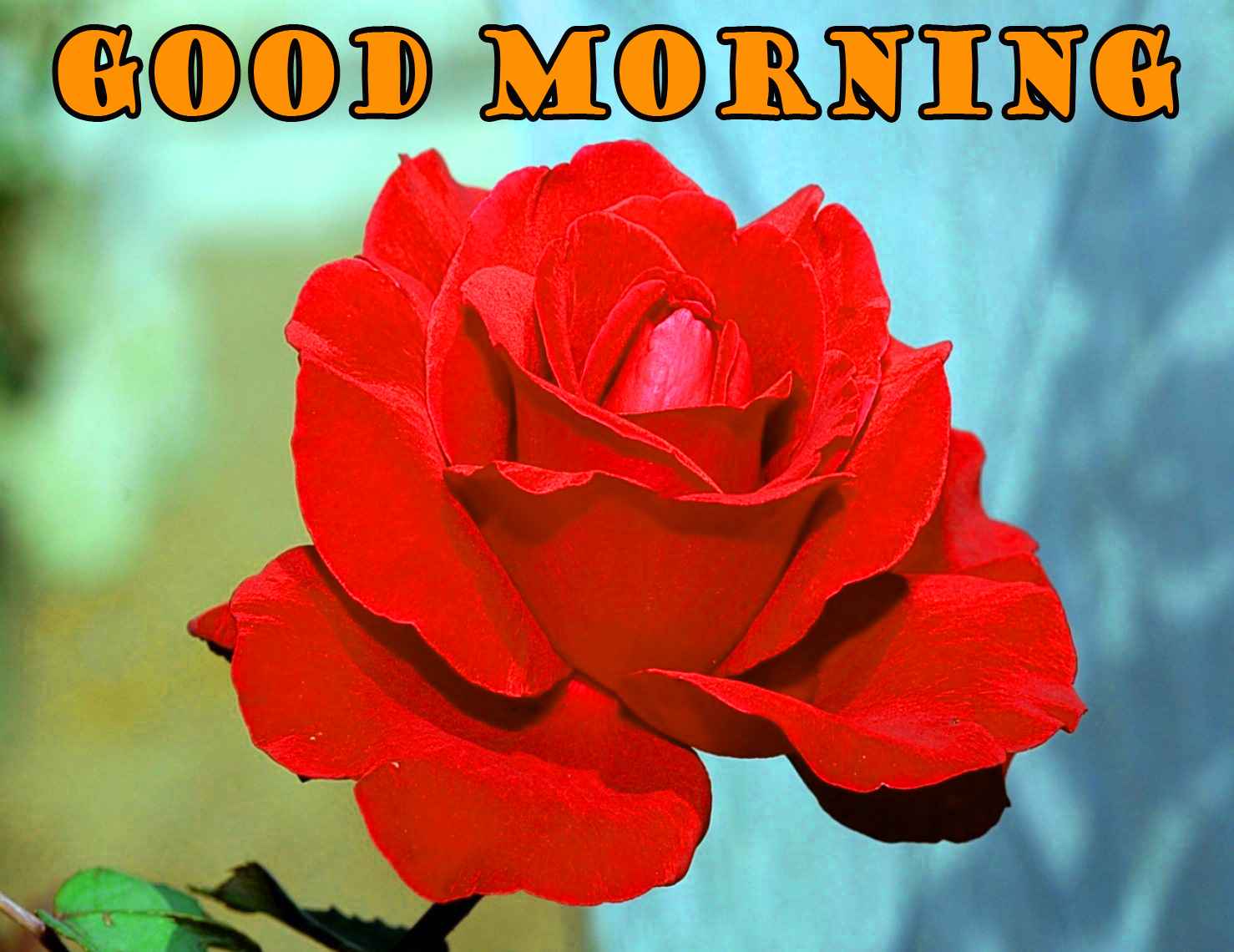 Good Morning Red Rose Photo Images Pictures For Facebook