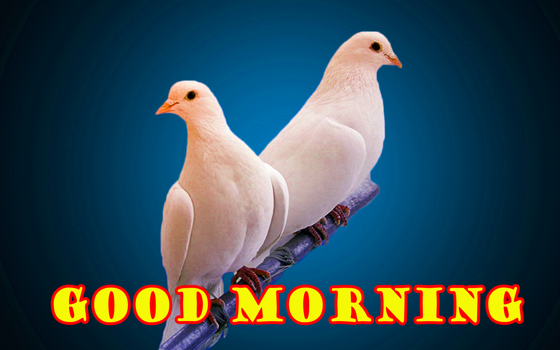 Special Wonderful Good Morning Wallpaper Photo Images Download