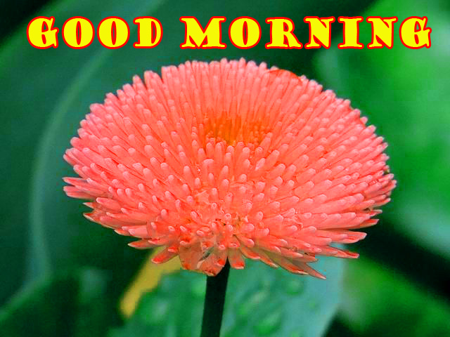 Special Wonderful Good Morning Photo Pictures Images HD