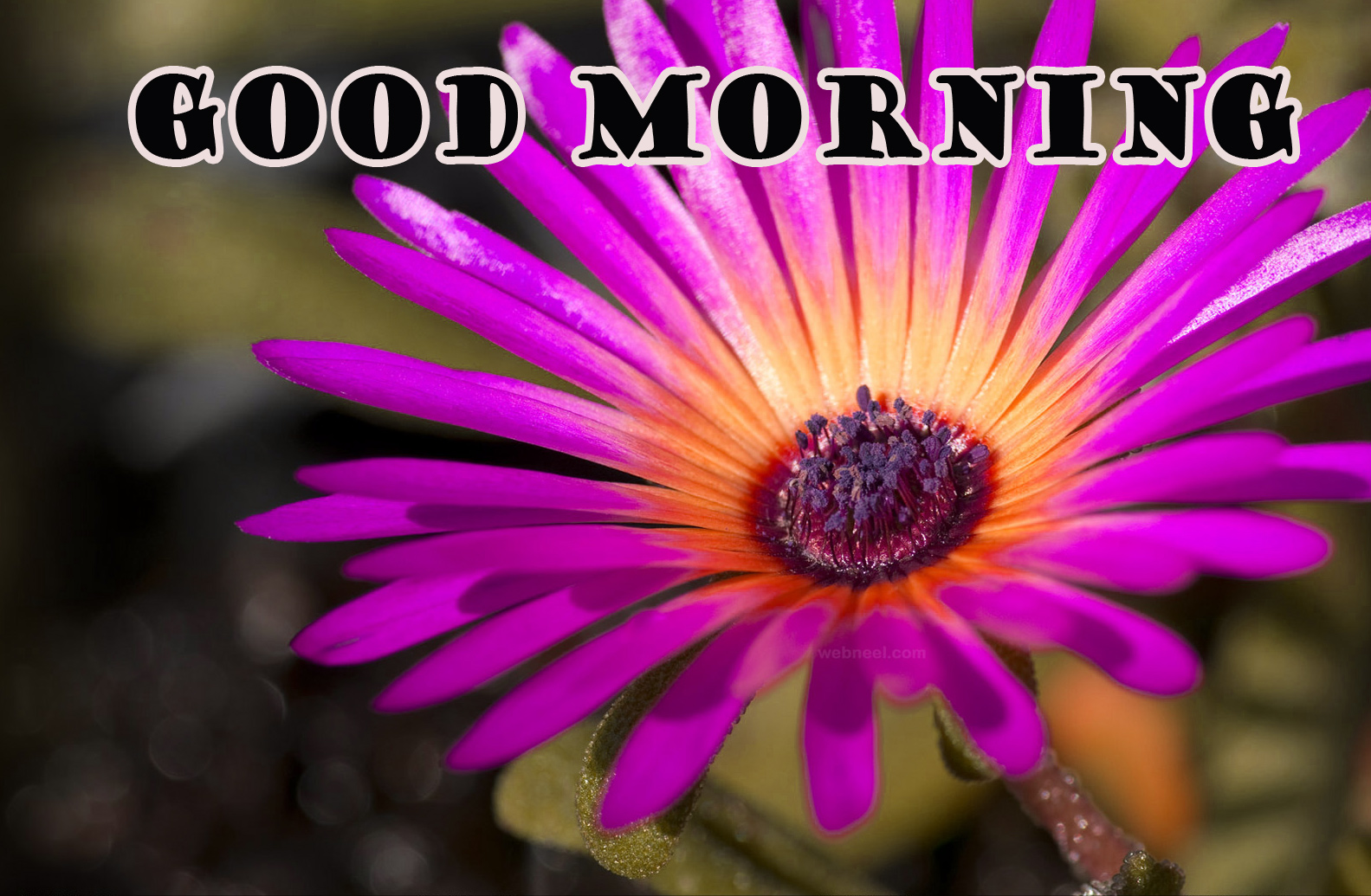 Special Wonderful Good Morning Pictures Photo Wallpaper For Facebook