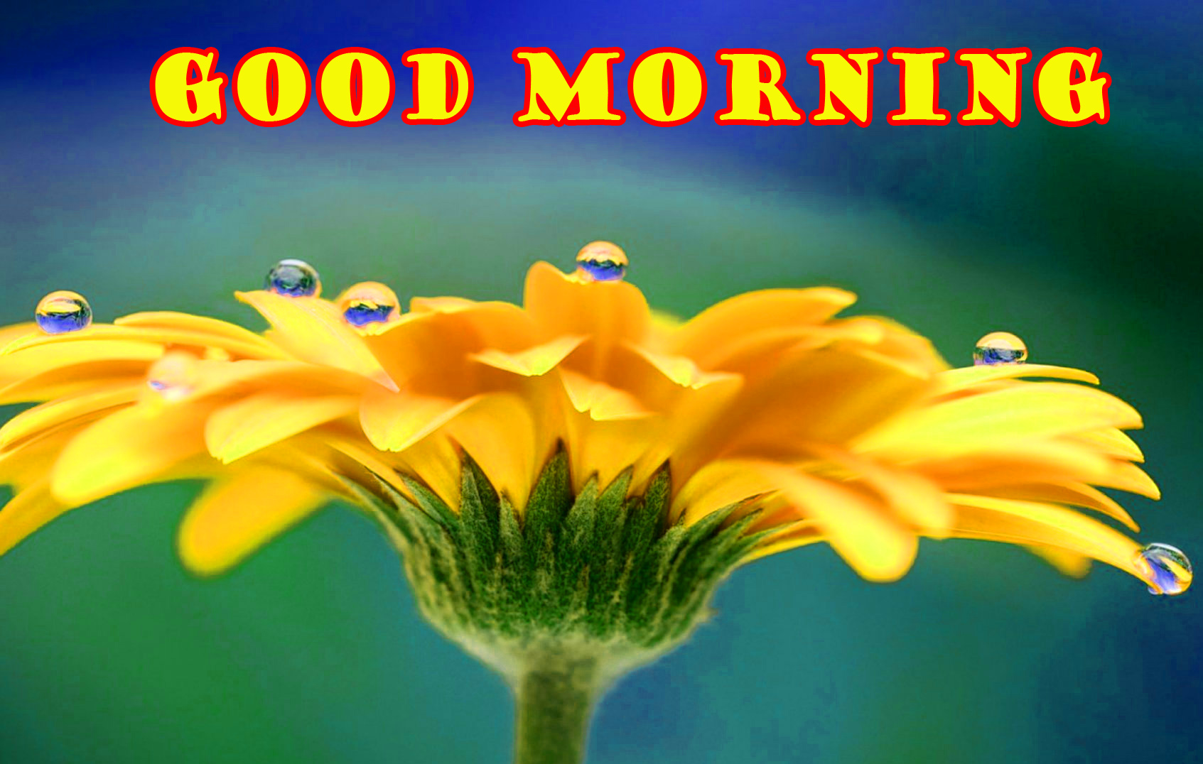 Special Wonderful Good Morning Wallpaper Pictures HD Download