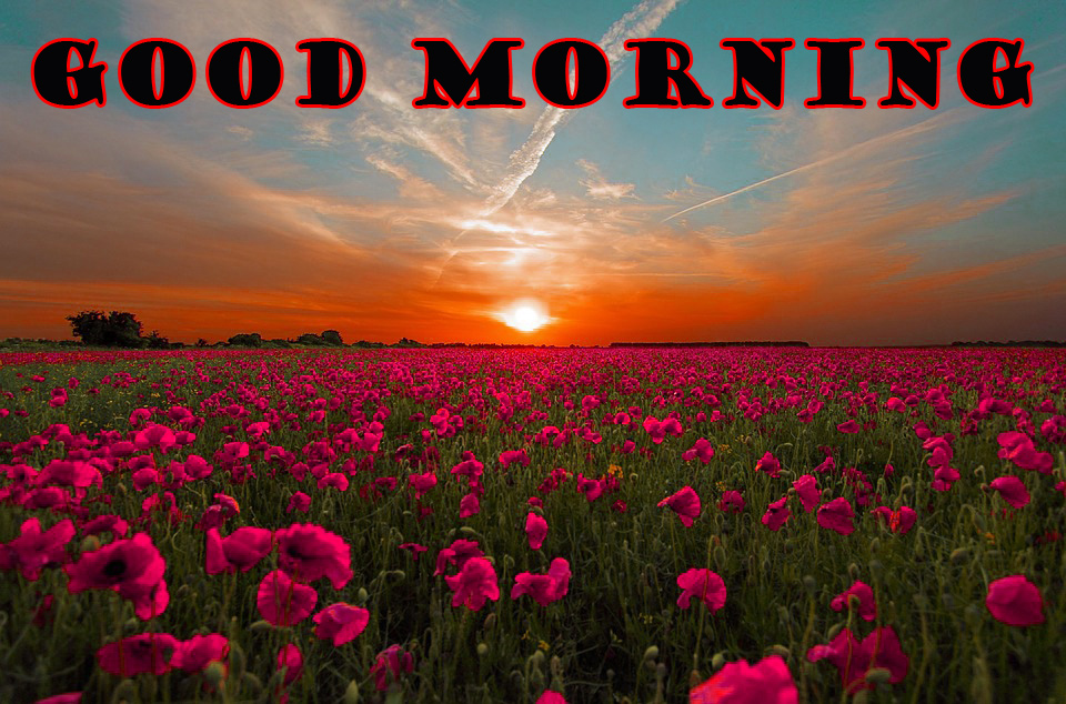 Special Wonderful Good Morning Wallpaper Pictures Free Download