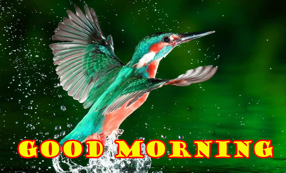 Special Wonderful Good Morning Pictures Images Photo Free HD