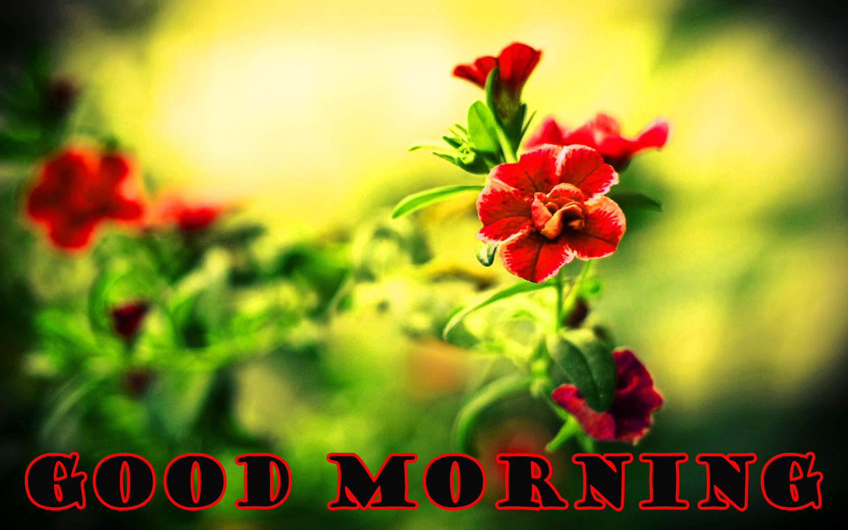 Special Wonderful Good Morning Photo Images Pictures Free Download