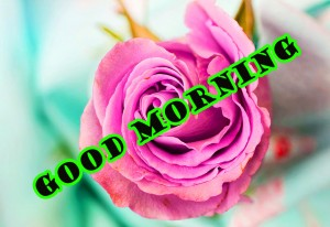 sweet good morning images Wallpaper Pictures Photo Download