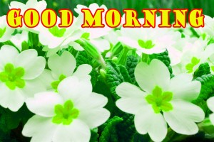 sweet good morning images Wallpaper Photo With Flower