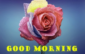 sweet good morning images Wallpaper Photo Pic Download