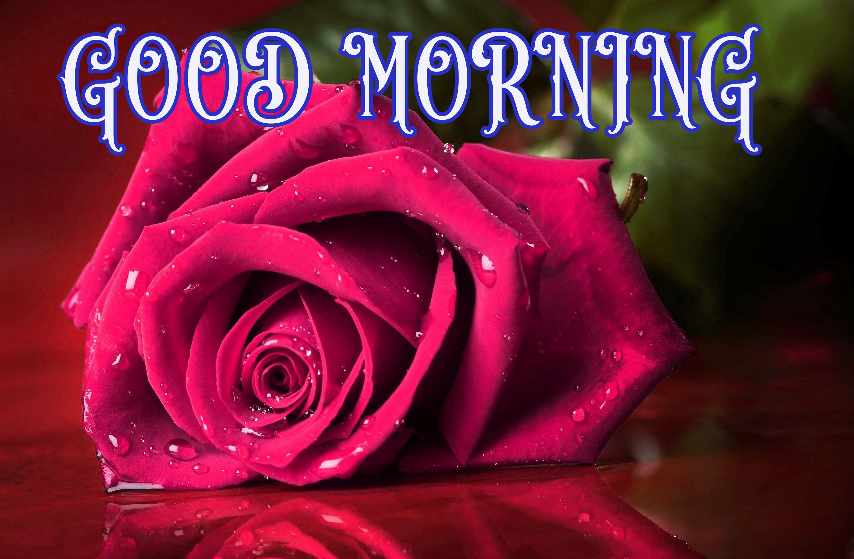New Lover Good Morning Images Wallpaper Pics With Red Rose