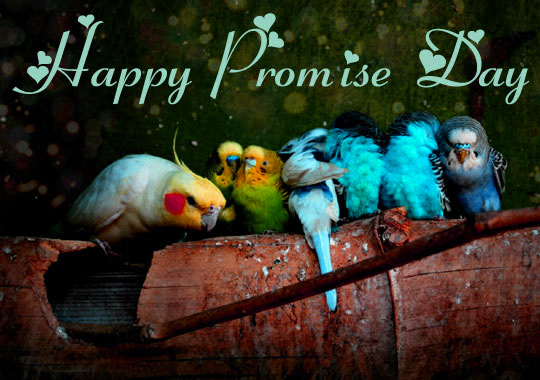 Promise Day Images  for Boyfriend & Husband Pictures Wallpaper photo Pics HD