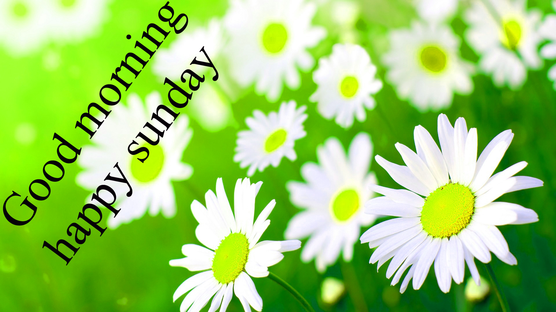 Sunday Good Morning Images Wallpaper Photo Pics Download