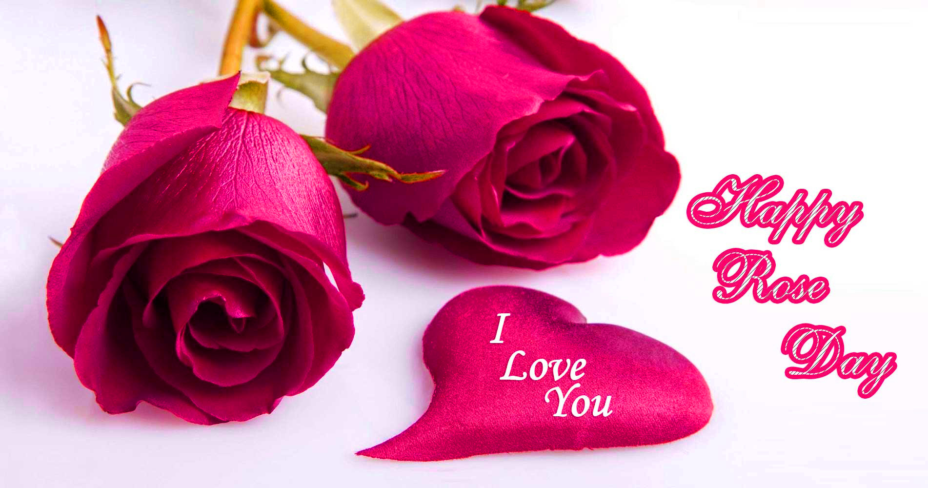 Happy Rose Day Images Photo Wallpaper Pictures Pics HD For Whatsapp