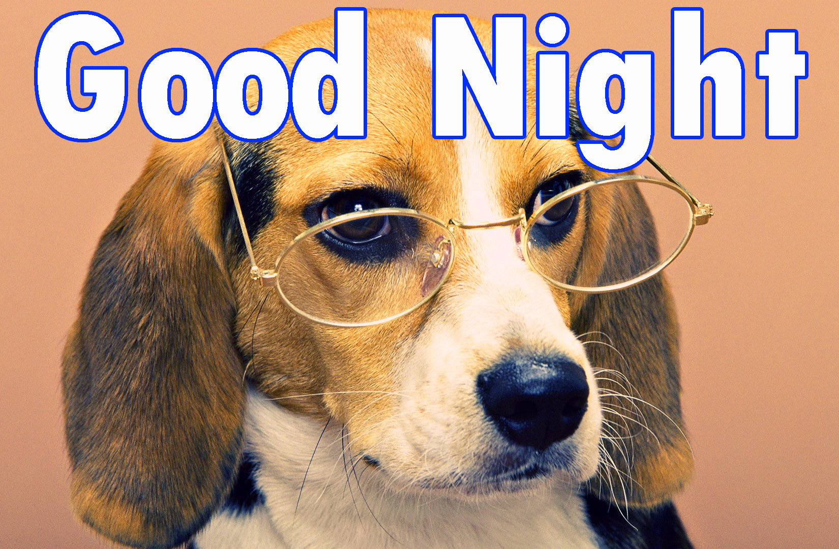 Funny Good night Images Wallpaper photo Pics Pictures Free Download