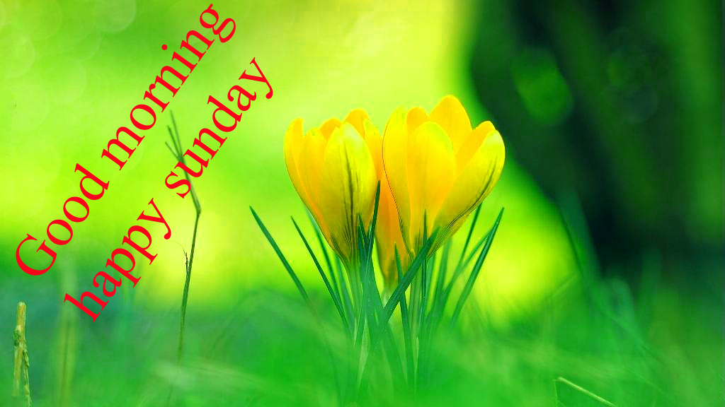Sunday Good Morning Images Wallpaper Photo Download
