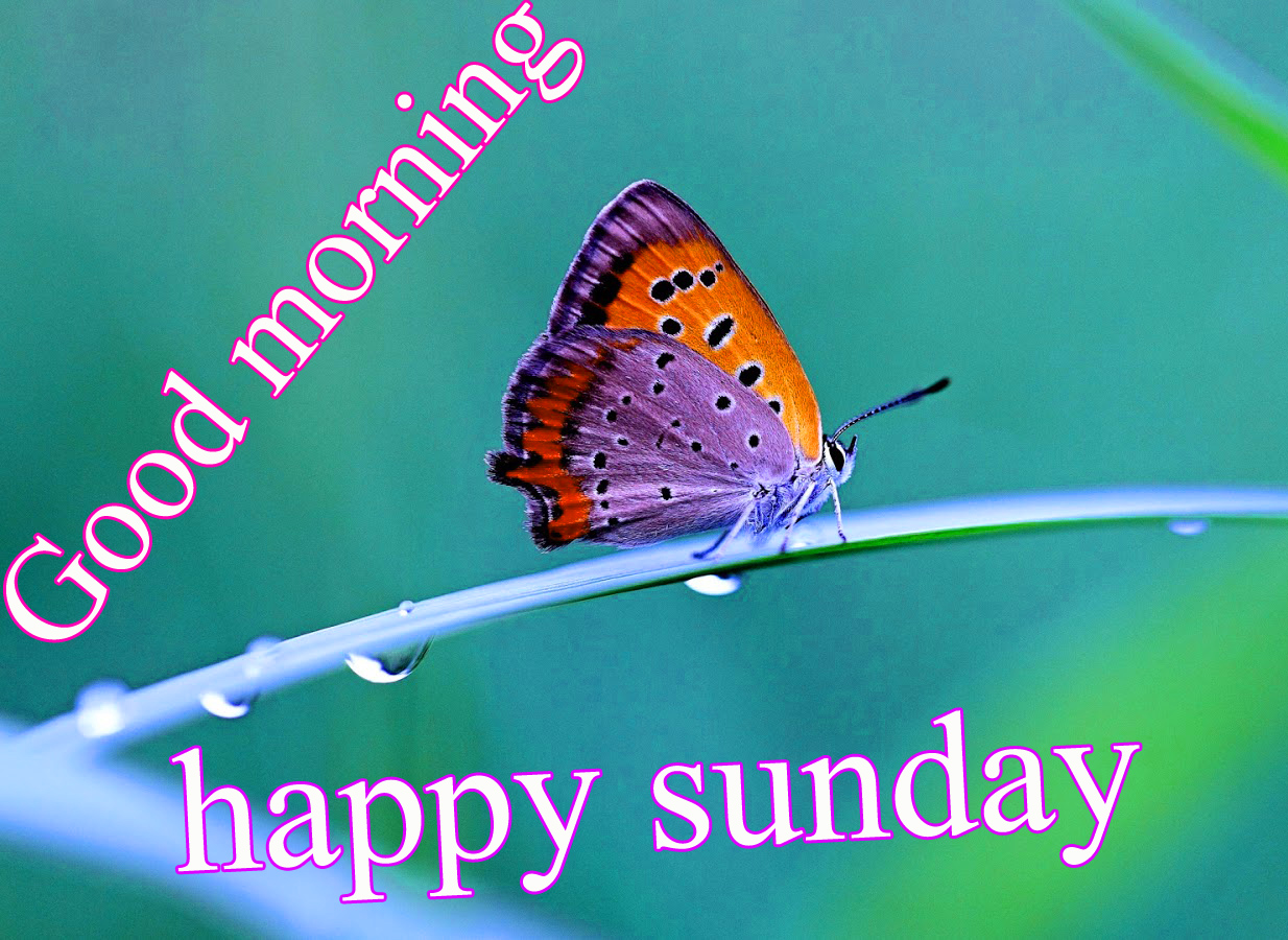 Sunday Good Morning Images Pics Wallpaper Photo Download