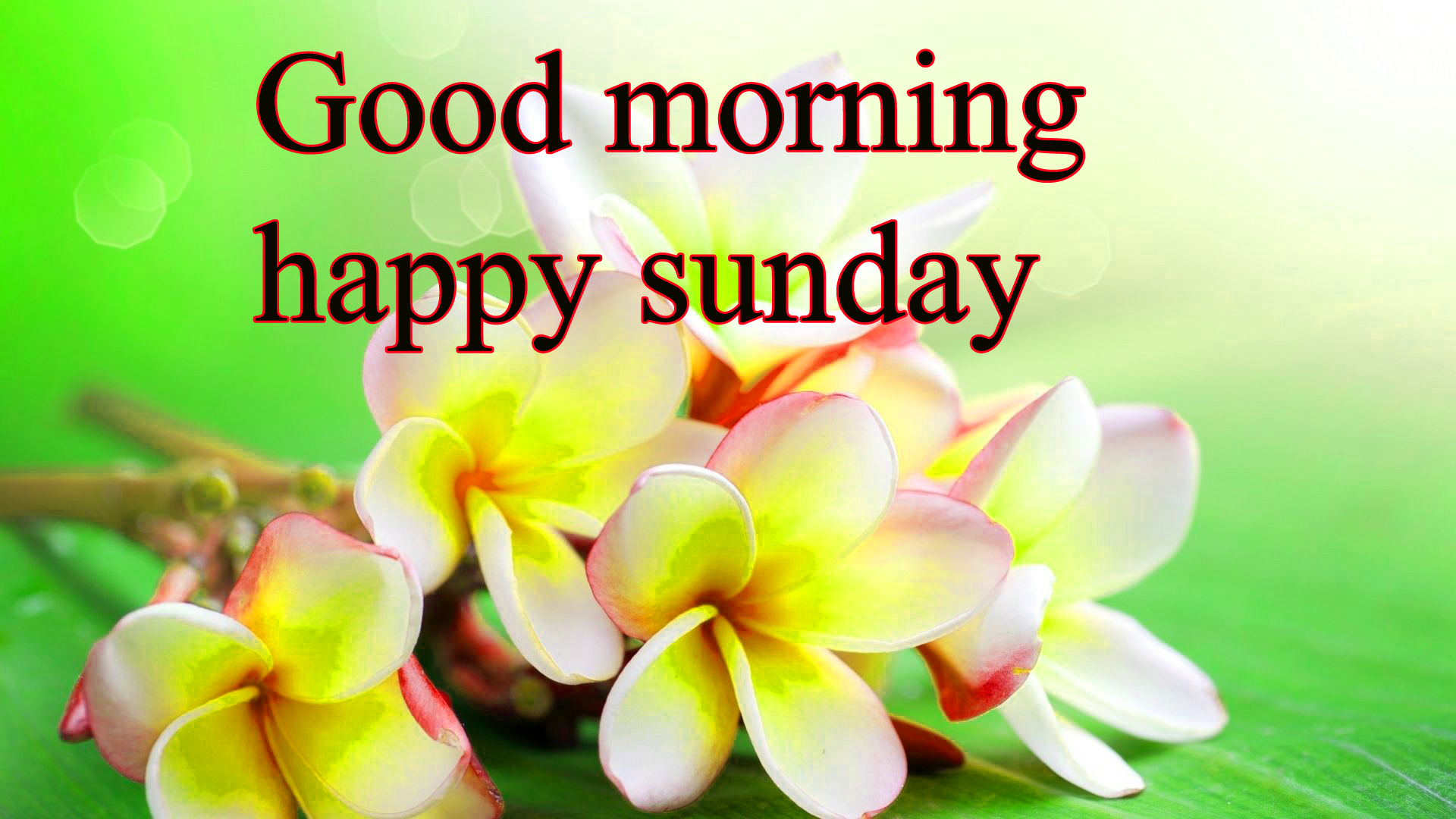 Sunday Good Morning Images Pics Wallpaper Photo Free HD Download