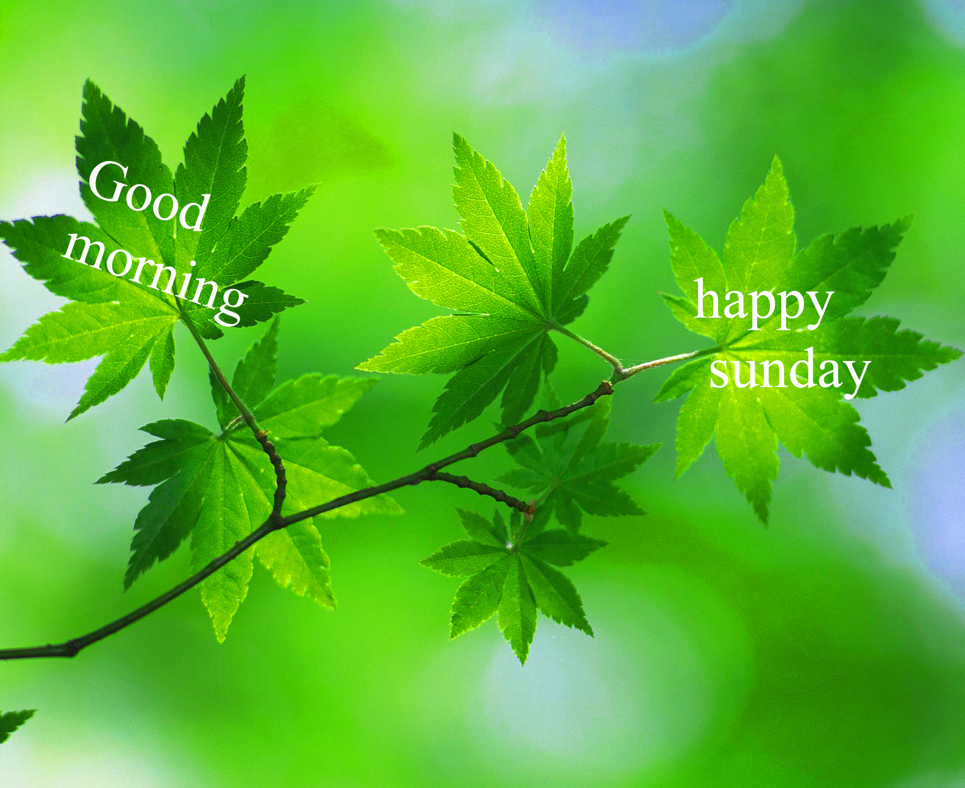 Sunday Good Morning Images Pics Wallpaper Photo Free Download