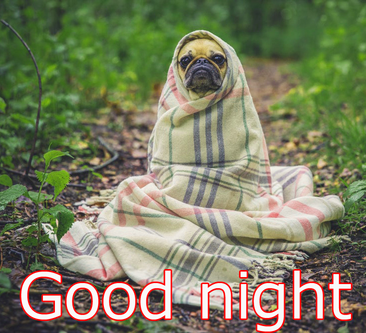 Funny Good night Images Wallpaper photo Pics Pictures HD Download