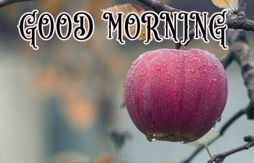 good morning Images for facebook tumblr pinterest and twitter Wallpaper Pics Free HD
