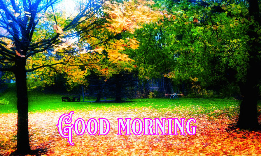 good morning Images for facebook tumblr pinterest and twitter Wallpaper Pics HD