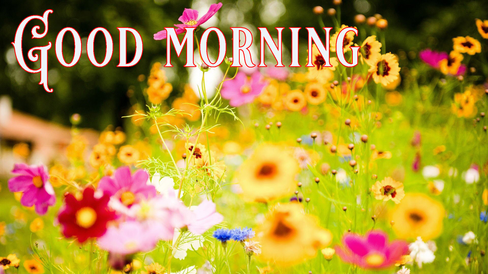 good morning Images for facebook tumblr pinterest and twitter Wallpaper Pics HD For Whatsapp