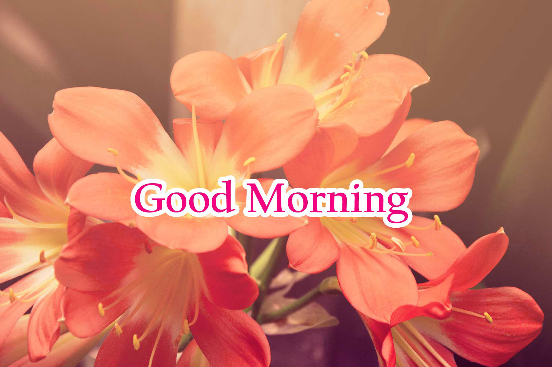 good morning Images for facebook tumblr pinterest and twitter Wallpaper Pics Free HD Download