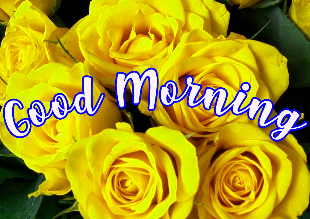 Good Morning Wishes Images With Romantic roses photo Pics HD