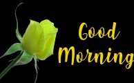 Good Morning Wishes Images With Romantic roses - 234+ रोज गुड मॉर्निंग