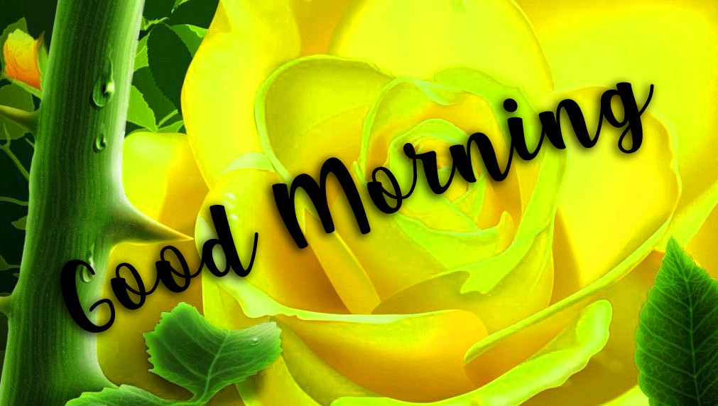 Good Morning Wishes Images With Romantic roses photo Pics Download
