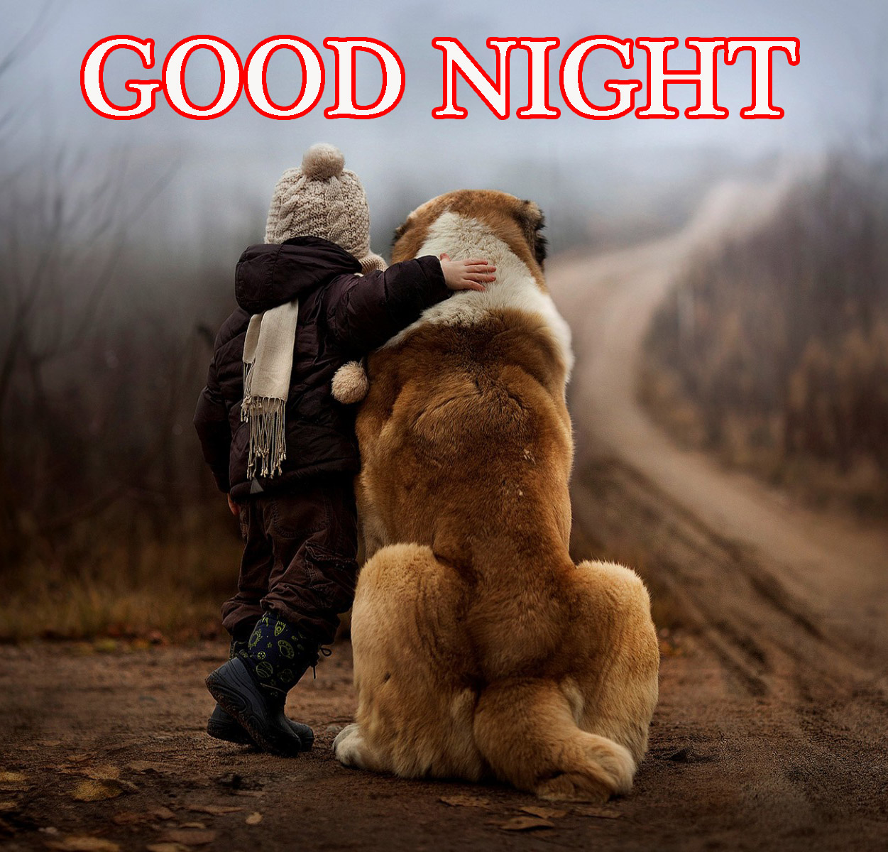 Good Night Images For Girlfriend Photo Wallpaper Pics Download