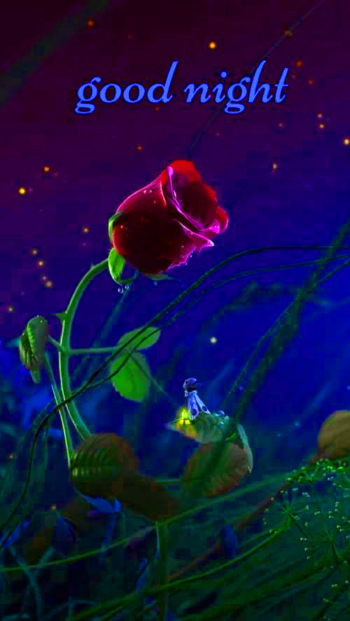 Good Night Images With Red Rose