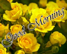 Good Morning Wishes Images With Romantic roses – 234+ रोज गुड मॉर्निंग
