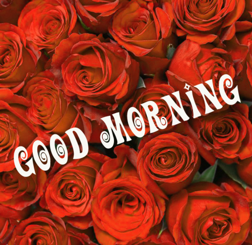 Good morning red rose images photo Wallpaper for Whatsapp